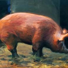ShawnKenney-Tamworth-Pig