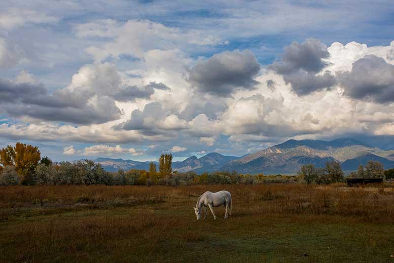 davegillygilstein-taos-horse