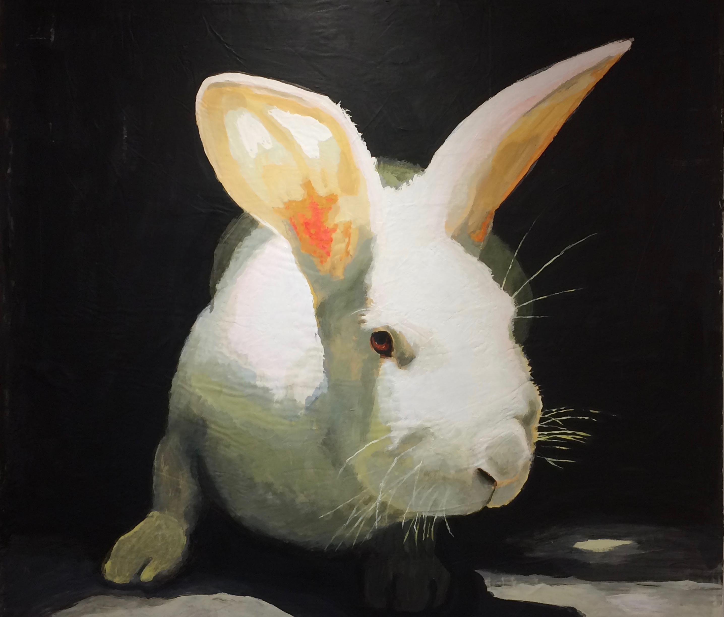 Rabbit Brite
