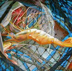 KathyHodge-shrimp-net